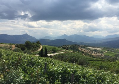 Nemea the 3000 year old wine making region