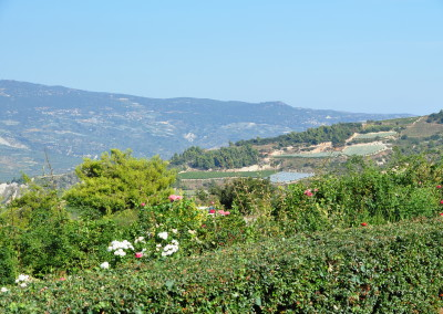 Views from the Semeli vinyard